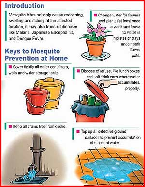 Tipsheet About Mosquito Prevention