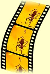 spider trapped in amber, as seen on a film strip