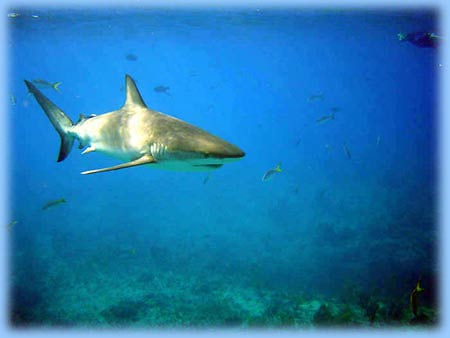 Shark Dangers: How Overblown?