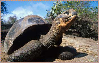 Tortoise Genes Record Volcanic Eruption