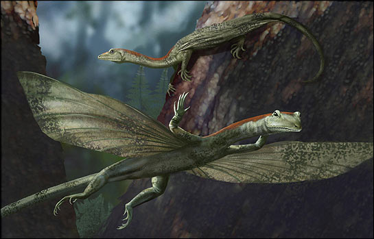 Ancient, gliding reptile discovered