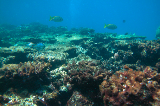 Coral reefs: Massive threats to survival around the globe