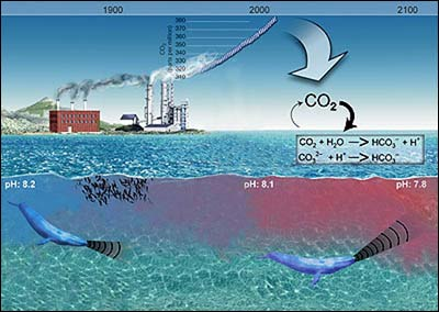 New concern as ocean grows more acidic