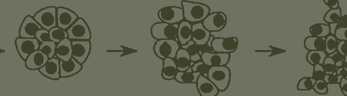 detail of schematic of cancer cells