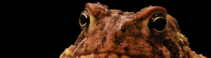 bumpy brown and black-spotted toad head
