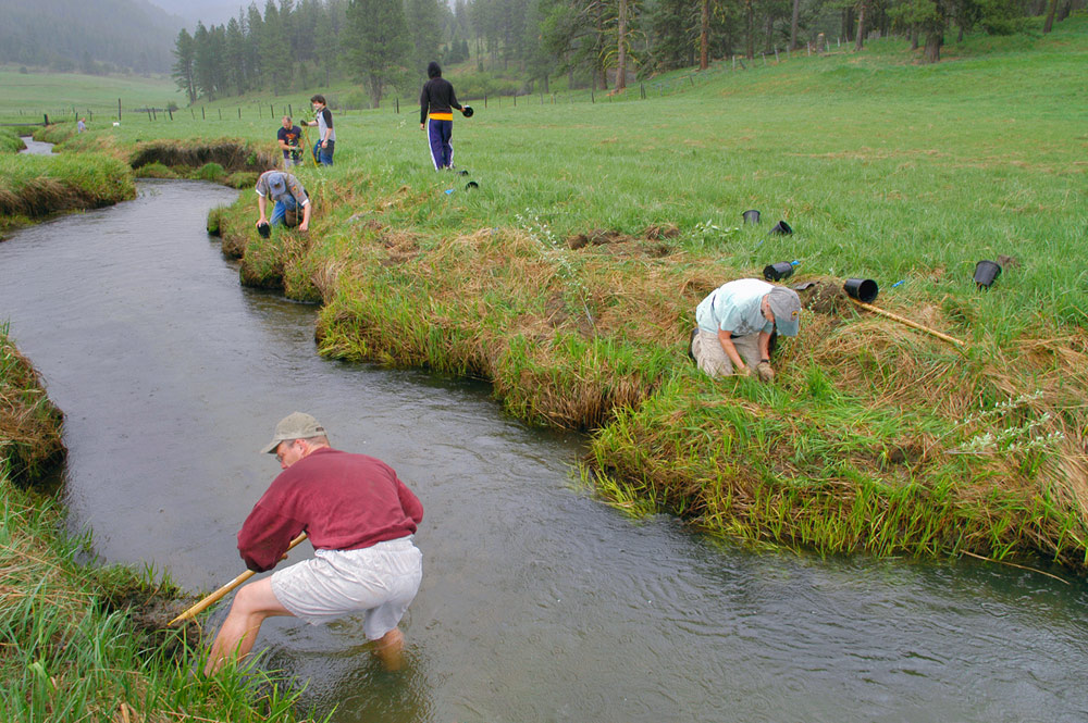 Six people plant a verdant stream bank on a misty day