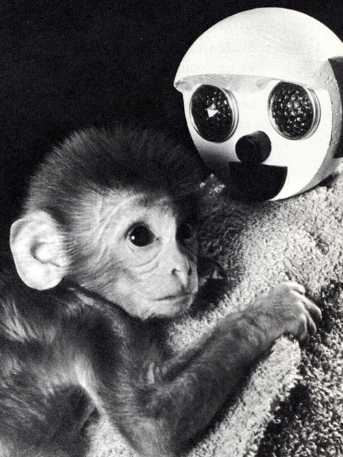 Baby monkey clings to rag doll with a circular head and big circular eyes
