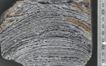 Slab of gray rock with horizontal lines from top to bottom indicating ancient layers