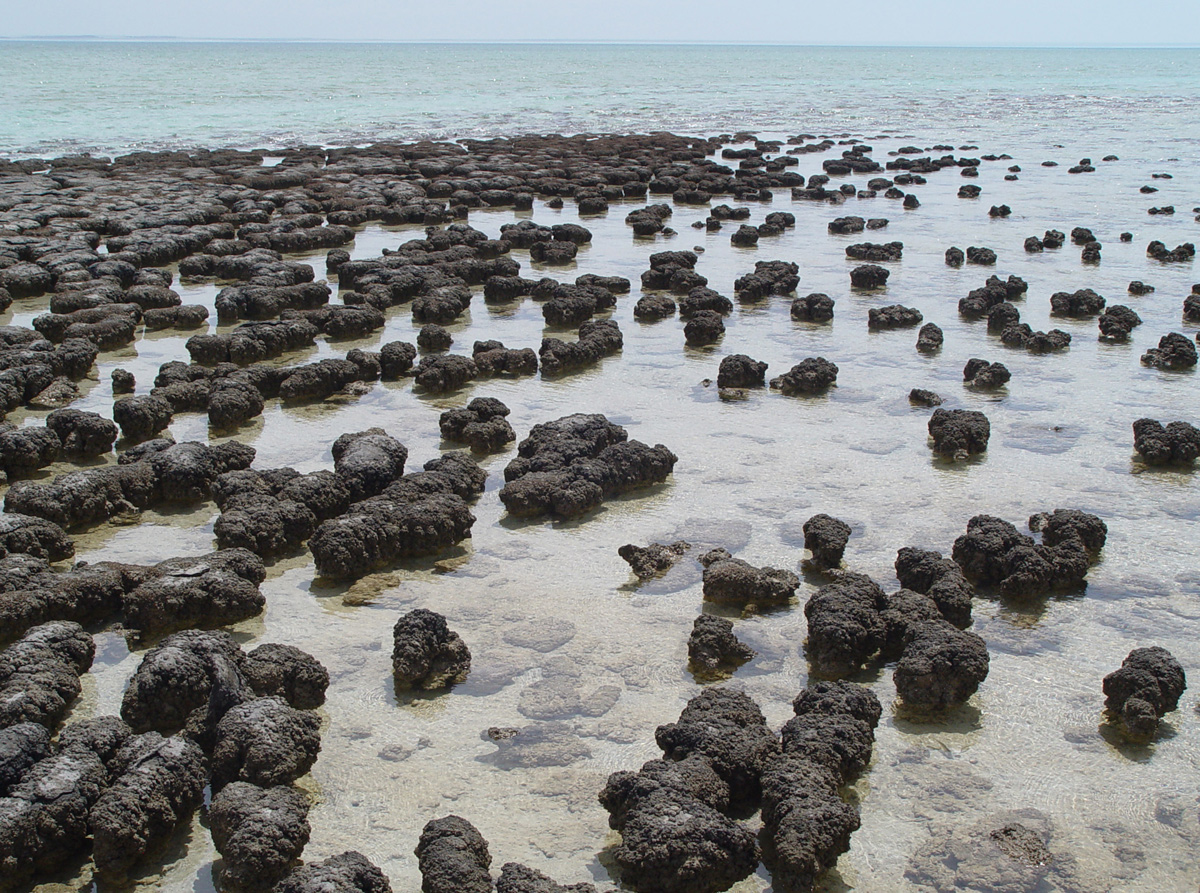 Shallow ocean bay with outcropping of hundreds of black rock mounds