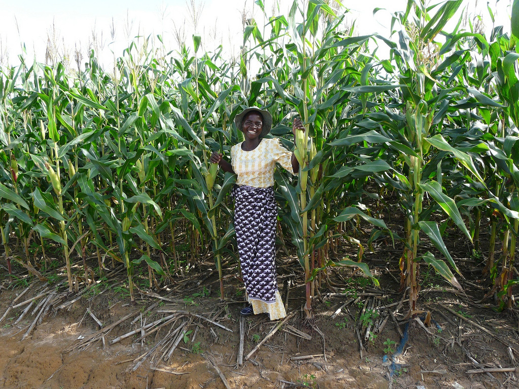 Smiling African woman standing with rows of tall maize