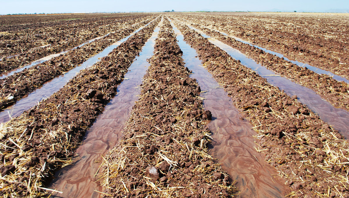 Soil key to solving the food crisis the why files for Soil and water conservation