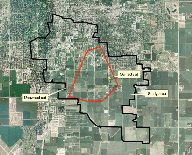 The secret life of cats the why files satellite image of suburban and farm landscape small yellow dot in corner of a large gumiabroncs Gallery