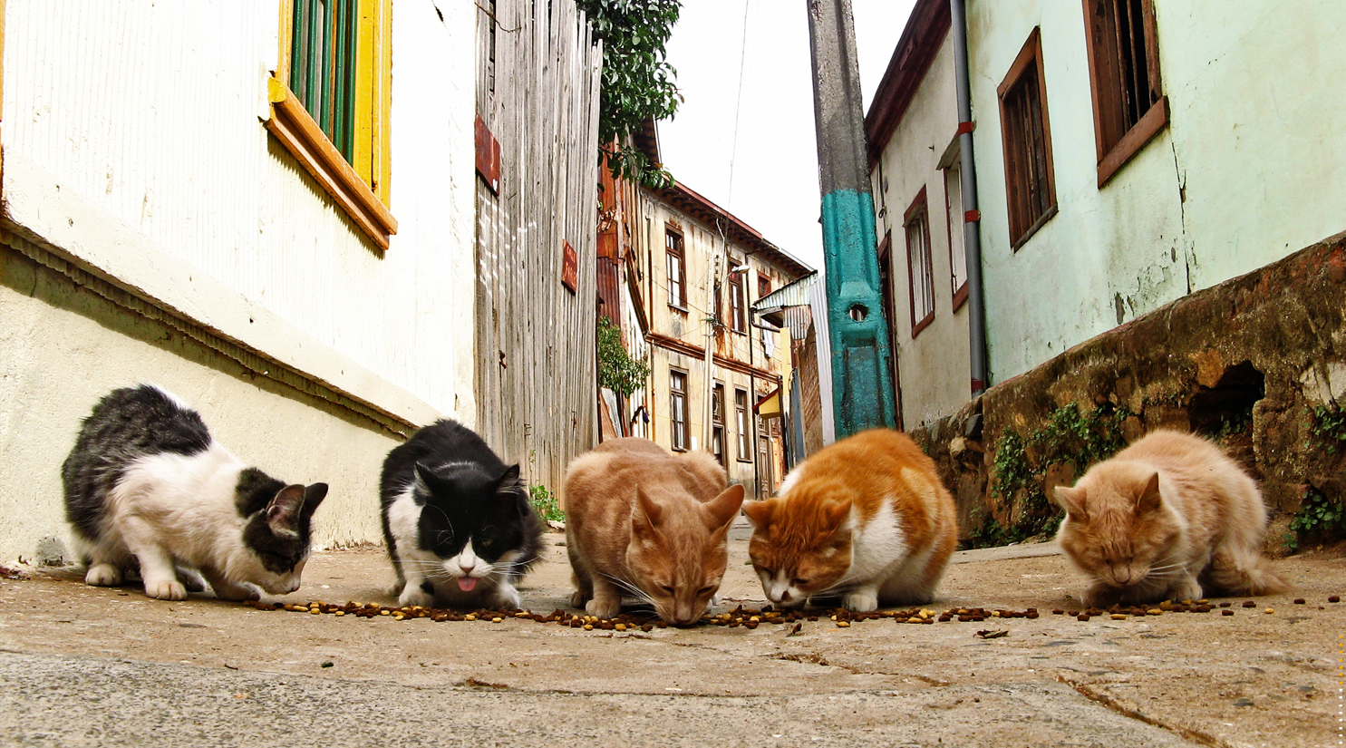 life of stray cats