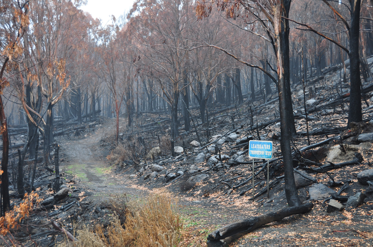 Forest hillside and path, trees are burned black, exposed soil and rocks on ground