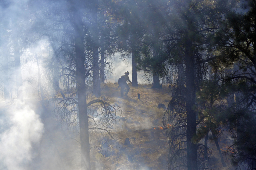 Pine forest clouded by smoke, flames on ground, firefighter in the center walking