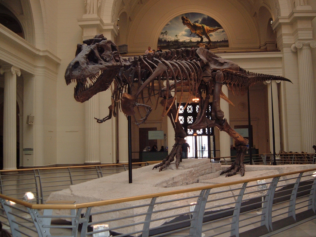 Skeleton of T. rex on display in museum lobby