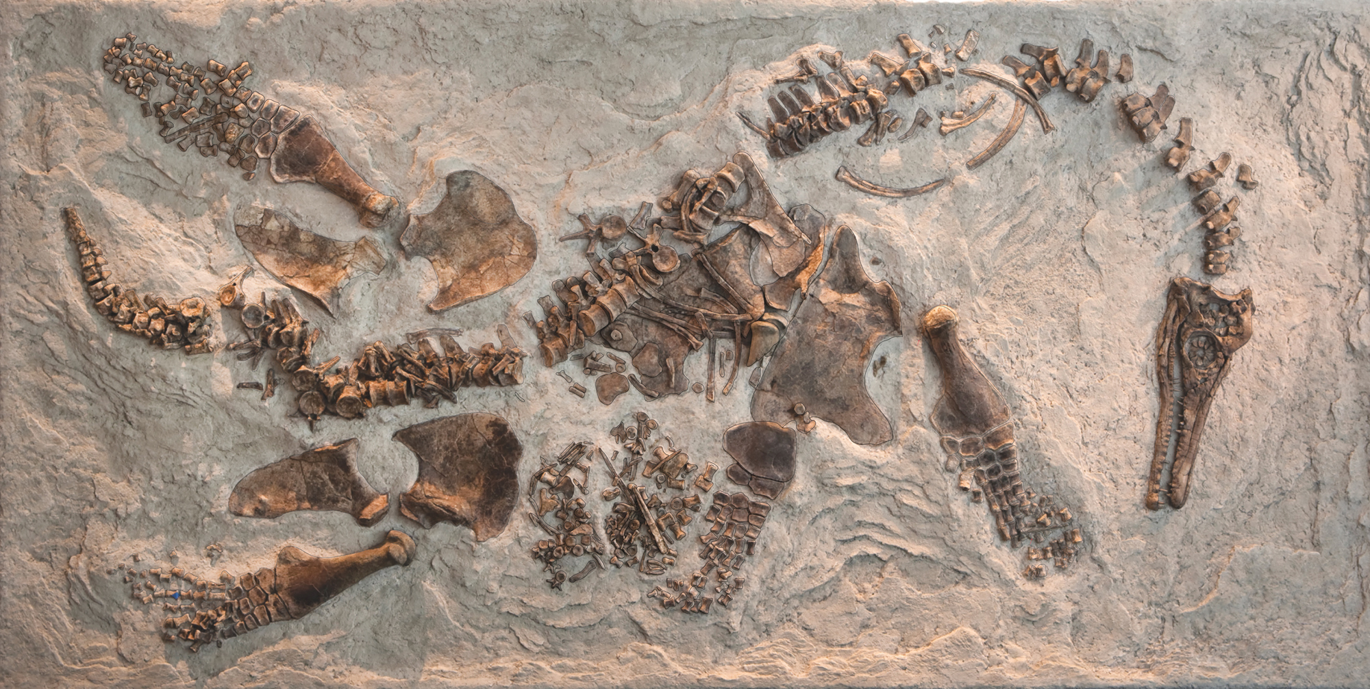 Larger reptile bones, with spine snaking through image, laid out on stone background.