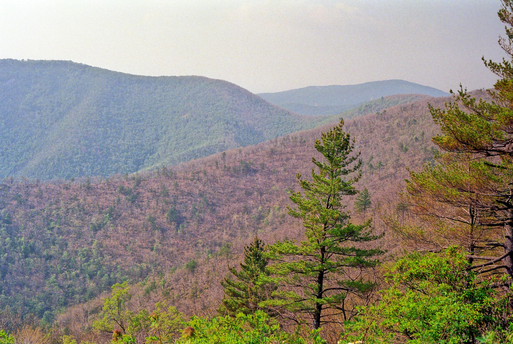 Tree-covered mountains, the trees on the mountain in foreground are stripped of their leaves