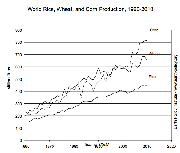 Lines for corn, wheat and rice increase sawtooth fashion between 1960 and 2009.  Wheat and corn are most instable