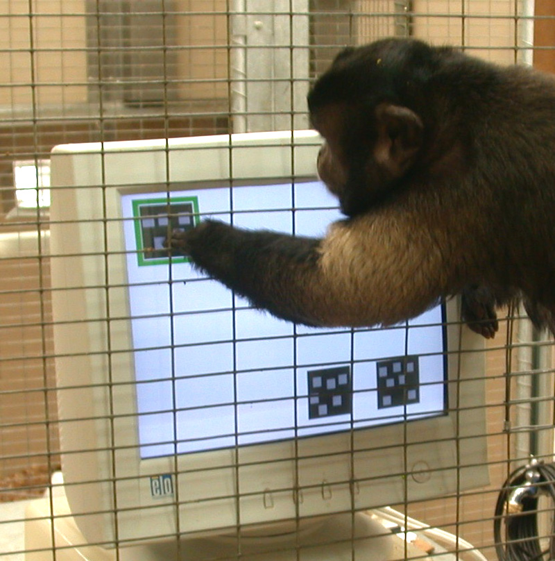 Monkey points at square in the upper left corner of a computer screen, two other squares at lower right corner