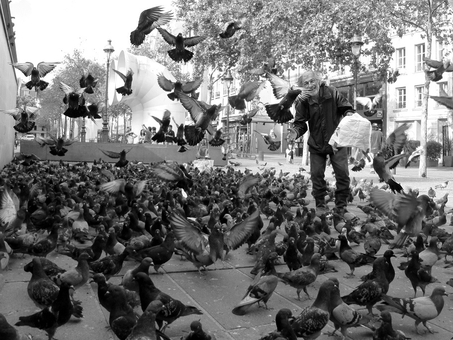 Old man throws seeds to a flock hundreds of pigeons, some on the ground and some flying<