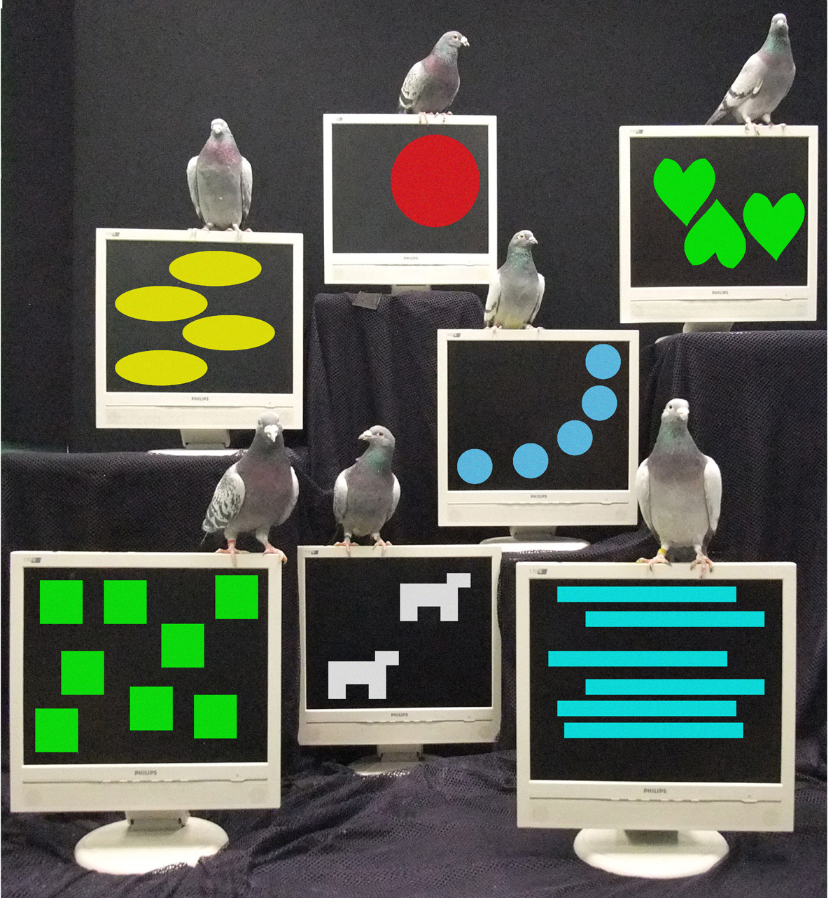 Seven pigeons sit atop seven computer screens, each screen displays a set of different shapes in different colors