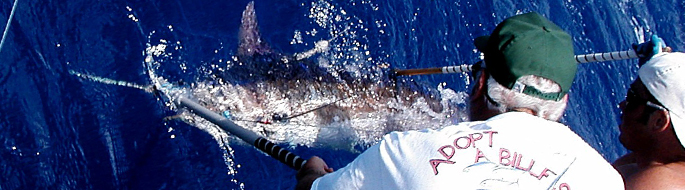 sailfish being tagged underwater