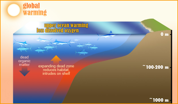 Diagram of cross-section of ocean and shoreline showing ocean warming, less dissolved oxygen, and widening dead zone