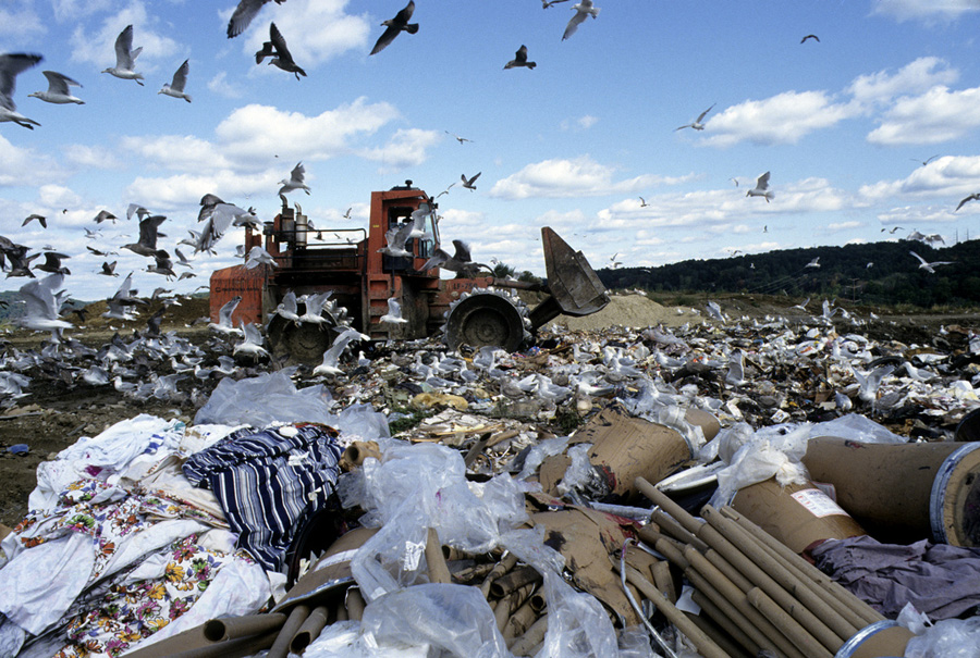 Front-end loader rolls over huge pile of trash, amid flying seagulls