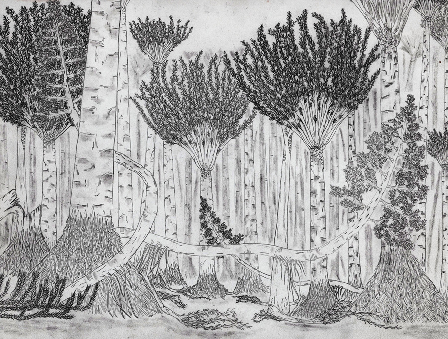 Black and white drawing of forest with huge vines and palm-like trees with buttressed roots
