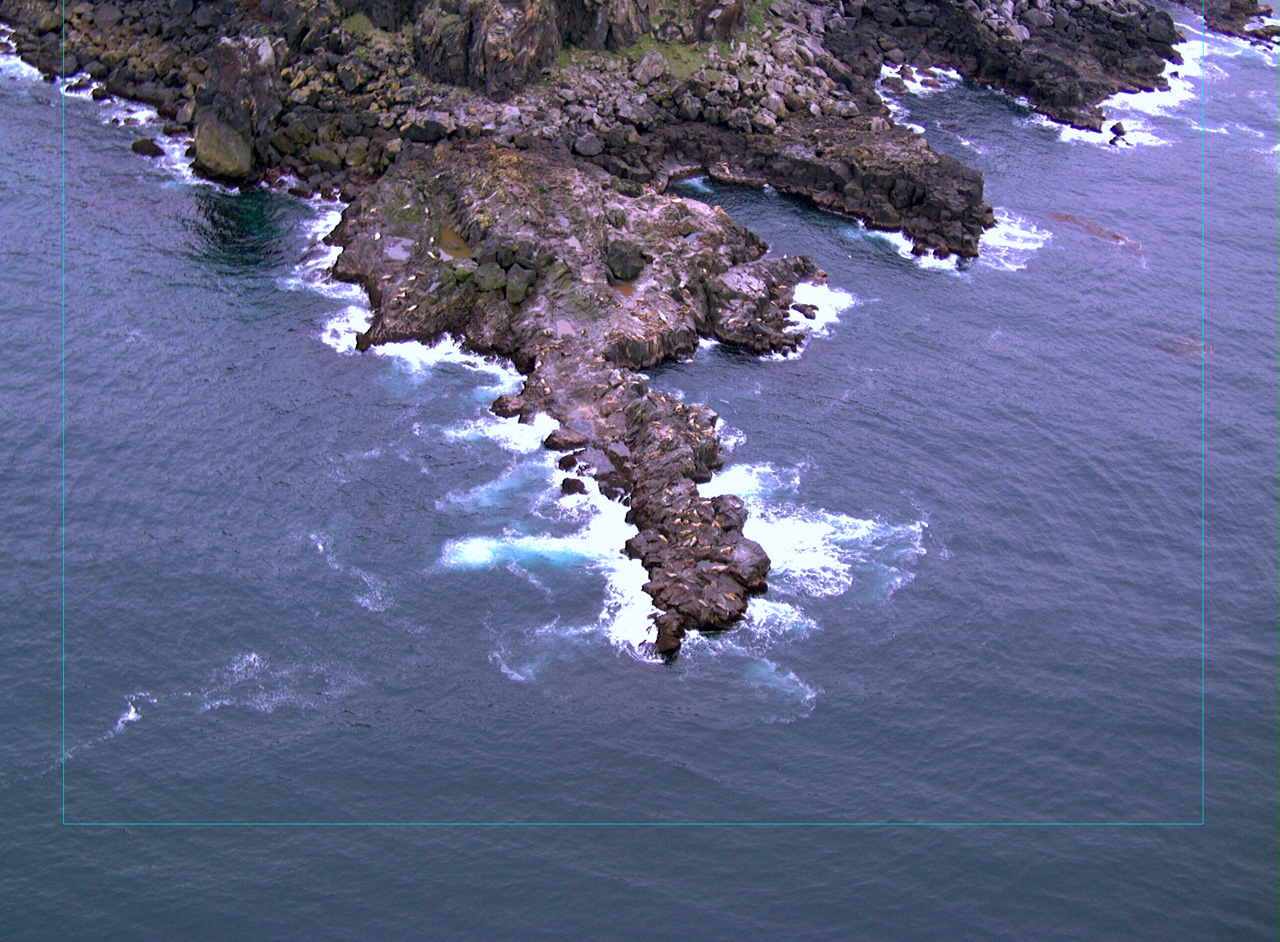 Rocky peninsula in dark ocean with waves crashing and animals visible on rocks.