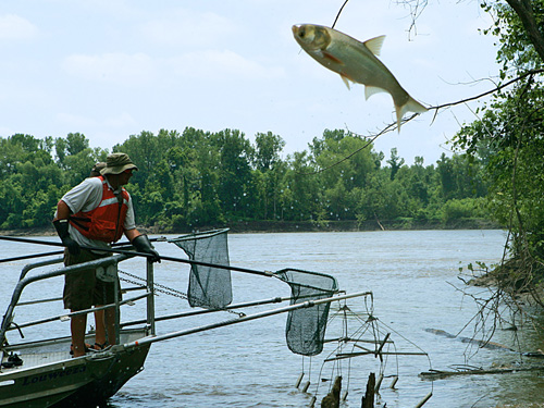 Putting the brakes on fish invasions