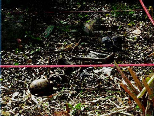 Bones lay exposed in a dark wooded area.