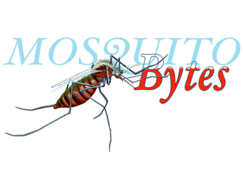 illustration of mosquito sucking blood out of the text: Mosquito bytes