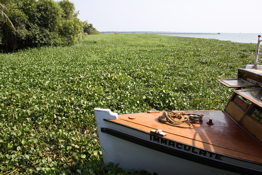 Boat in foreground on plant that extends into distance on water lined by forest on left, clear water on right