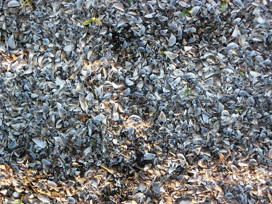 Many grayish empty shells with some brown.