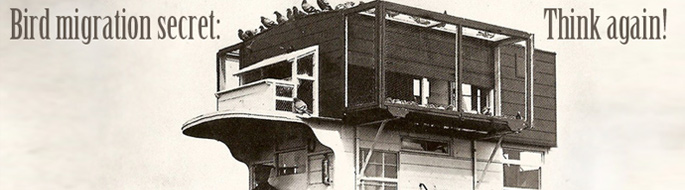 sepia-toned phtograph shows pigeons perched atop what looks like a house on top of a truck. Human driver is just visible