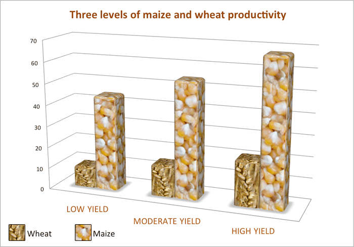 Bar graph comparing wheat and maize production over three yield levels. Maize is higher in every case.
