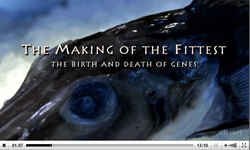 Title of 'The Making of the Fittest' video, with close-up of head of a frozen fish