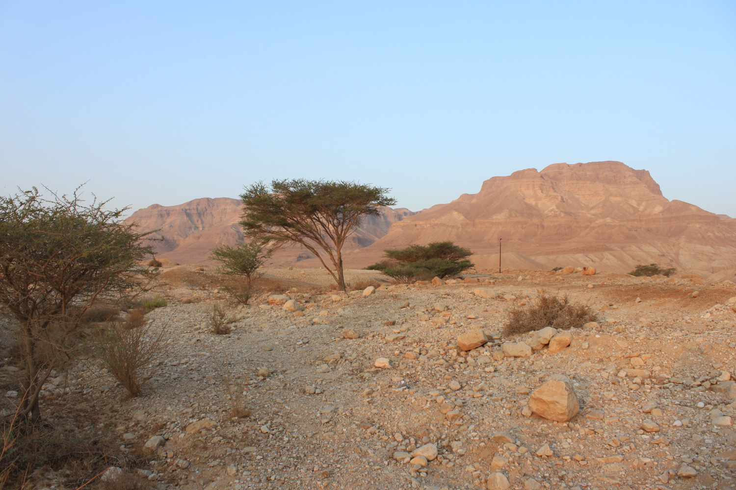 Desert with mountain in background and several shrubs and trees