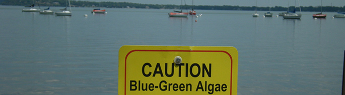 caution blue-green algae sign