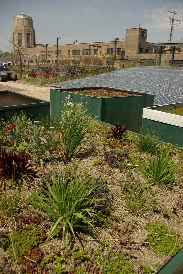 Garden on a city rooftop.