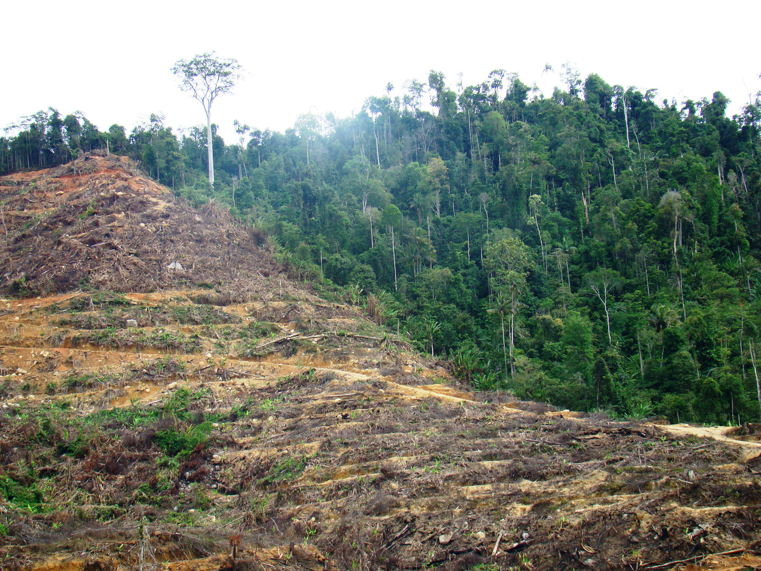 Photo shows hillside denuded of trees on left, intact tropical forest on right.