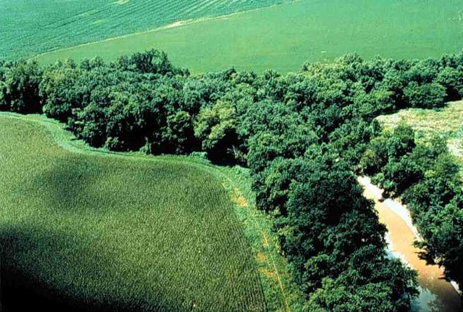 Stream meanders through farm fields, surrounded by trees.