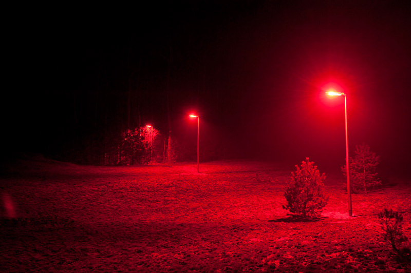 Forest with line of lamp posts shine red light.
