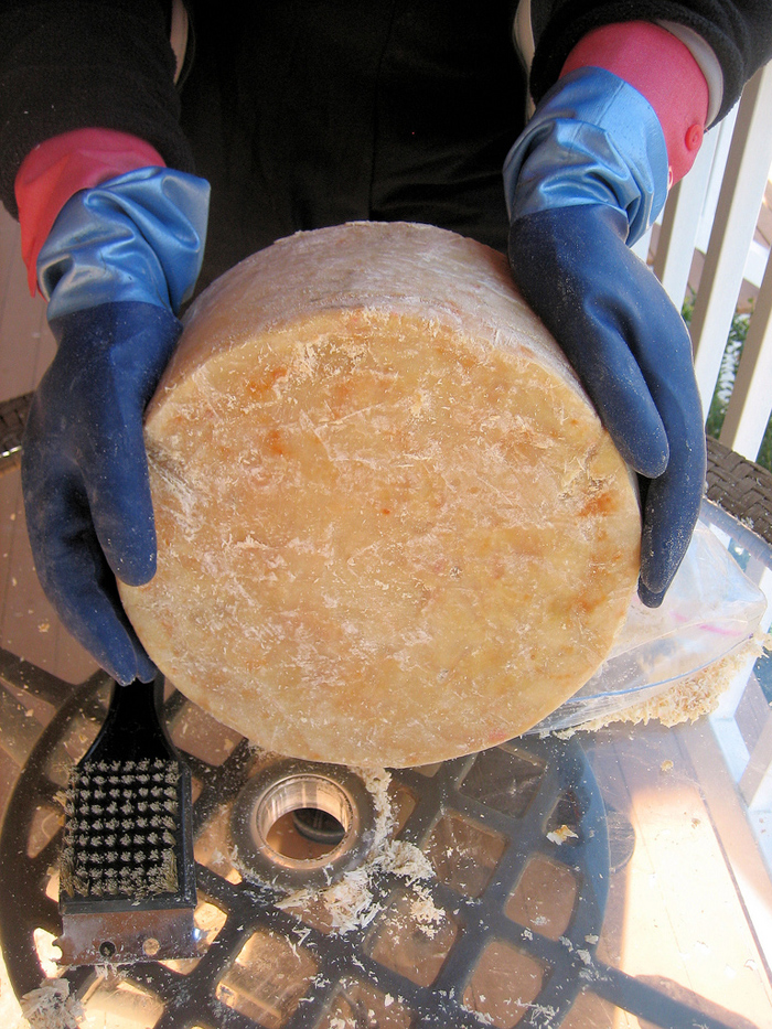 Two gloved hands lift rough cylinder of aged cheese