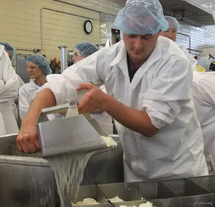 Student in white lab coat and blue hair net holds scoop as white whey pours through the sieve.