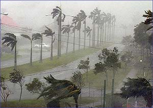 Palm trees sway and bend during heavy wind and rain
