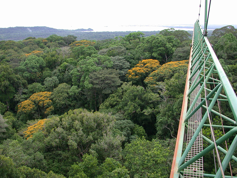 Vista of forest from above treetops, arm of crane suspending photographer visible.