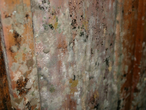 After the flood, the menace of mold
